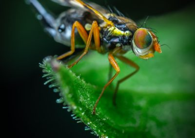 bug-close-up-fly-2962771