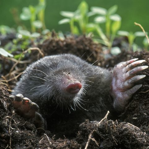 get-rid-of-moles-yard-1548710276