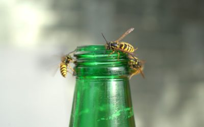 Wasp Nest Removal - Wasp Pest Control