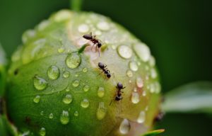 Ant Control & Treatments