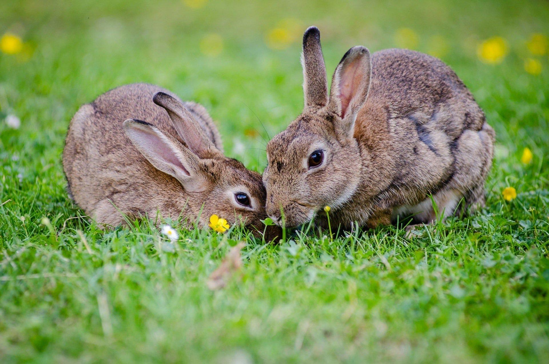 Landguard Pest Control - Rabbit Control