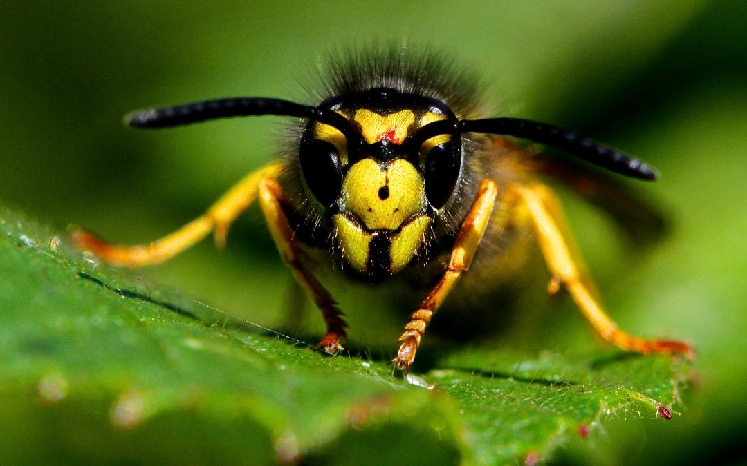 What is a wasp?