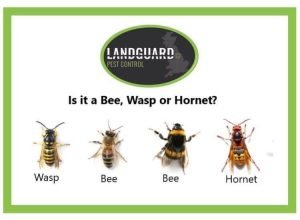 Difference between Bee, Wasp & Hornet